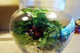 round bowl terrarium with herbs grow herbs in a terrarium