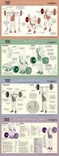 best 25 powerlifting ideas on pinterest bodybuilding