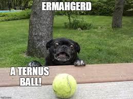 Ermahgerd Meme Creator - pug tennis ball meme generator imgflip