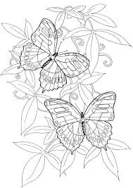detailed butterfly coloring pages for adults adult butterfly coloring pages for adults