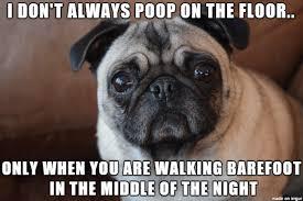 Funny Pug Memes - funny little pug meme on imgur