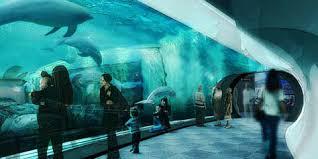 vasche acquario acquario di genova report report
