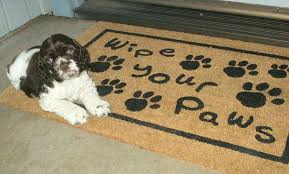 Wipe Your Paws Mat Decorative Wipe Your Shoes On The Mat Style Guru Fashion Glitz Glamour