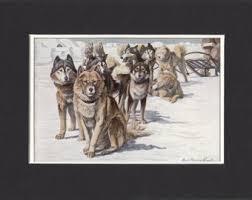 american eskimo dog nz eskimo dog etsy