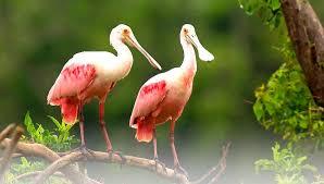 Florida Birds images Florida birds alafia river watershed excursion jpg