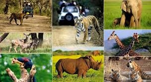 wildlife tours images Indian wildlife tours a journey to experience wildlife much closer jpg