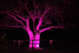 Hire Outdoor Lighting - outdoor lighting hire wedding and event lighting by oakwood events