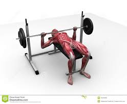 bench press workout stock image image 34164601
