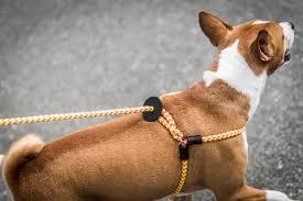 Comfort Flex Dog Harness Harnesses Abel Pet Supply