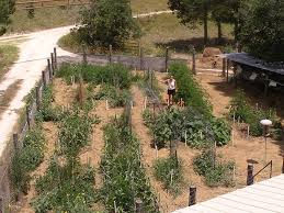 amazon com food production systems for a backyard or small farm