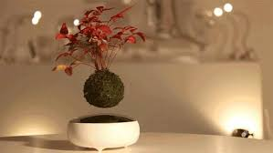 table centerpieces for home stunning table centerpiece ideas floating in the air bonsai trees