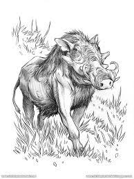 drawn boar sketch pencil and in color drawn boar sketch