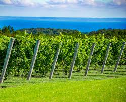 Wisconsin Winery Map by Leelanau Peninsula Wine Trail Map Leelanau Peninsula Wine Trail