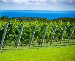 Michigan Wineries Map by Leelanau Peninsula Wine Trail Map Leelanau Peninsula Wine Trail