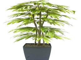 plants that need low light best indoor trees low light sayhellotome co