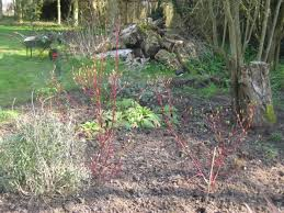new projects in the garden and a look at the winter garden the