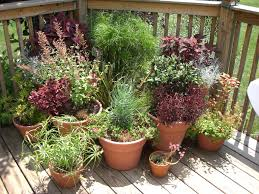 hallson gardens u2022 view topic back porch and patio containers
