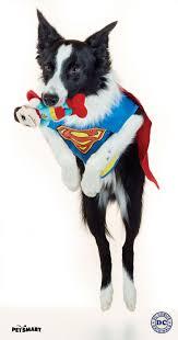 funny dog costumes halloween 105 best monstercute halloween images on pinterest actors dog