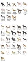 best 25 akc breeds ideas on pinterest akc dog breeds breeds of