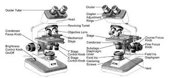 compound light microscope parts and functions text cellular structures