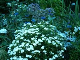 best 25 moon garden ideas on pinterest night garden moon plant