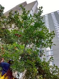 fairhill native plants popharvest u2013 philadelphia orchard project