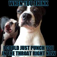 Boston Terrier Meme - th id oip qpuscn src3vskage3lygqhahx