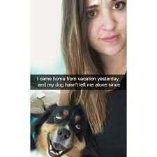 T Dog Meme - 20 dog memes that will definitely put a smile on your face