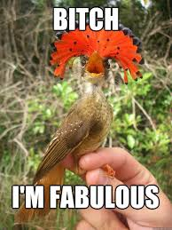 bitch i m fabulous fabulous bird quickmeme
