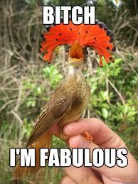 Bitch Im Fabulous Meme - bitch i m fabulous fabulous bird quickmeme