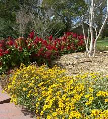 29 best n texas gardens images on pinterest bed ideas flower