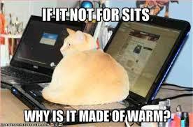 Cat Laptop Meme - a muslimahs musings cat on a laptop