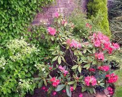 types of shade loving shrubs