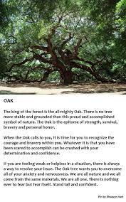 tree symbolism oak tree symbolism stand tall pinteres