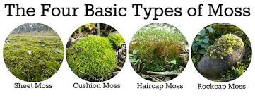 Types Of Community Gardens - the four basic types of moss hydroponics ღ small gardening
