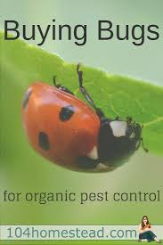 Gardening Pest Control - 465 best bugs pests home garden images on pinterest home