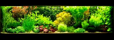 Aquarium Aquascapes Aquascape Dutch Style T A G