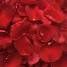 flower petals petals
