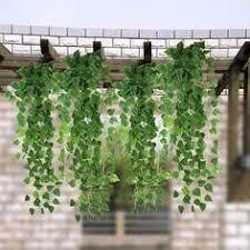 Indoor Vine Plants Indoor House Vine Plants Google Search Indoor Gardens