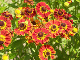 12 Best Annual Flowers For by The Best Fall Blooming Flowers For Your Yard Page 9 Of 12