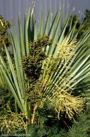 plants native to north texas texas native plants database