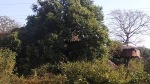 tree house surrounded by thick trees picture of dandeli mist