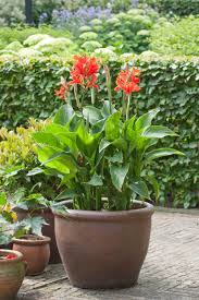 design tips for growing summer bulbs in containers