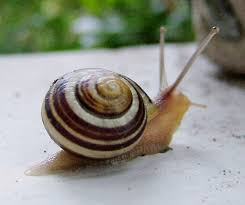 file snail on railing jpg wikimedia commons
