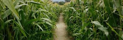 corn mazes in and around salt lake city out and about salt
