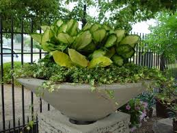 Tropical Plants For Garden - tropical plants in containers dirt simple