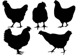 chicken leg free vector art 934 free downloads