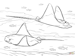 cownose and bull eagle rays coloring page free printable