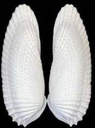 Where To Buy Seashells Seashells Com Seashells Nautical Sea Shell Crafts And More