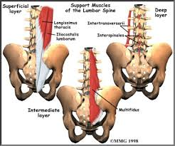 lower back anatomy houston methodist